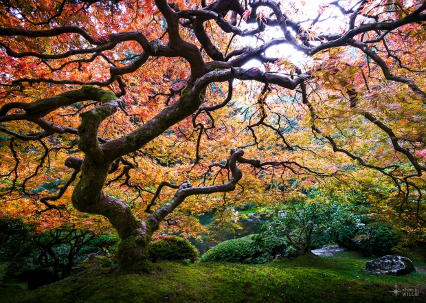 All-Things-Relative-Portland-Japanese-Garden-Oregon_WhereToWillie